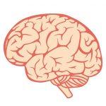 【閲覧注意】切り開いた頭蓋骨から脳をごっそり摘出する解剖映像