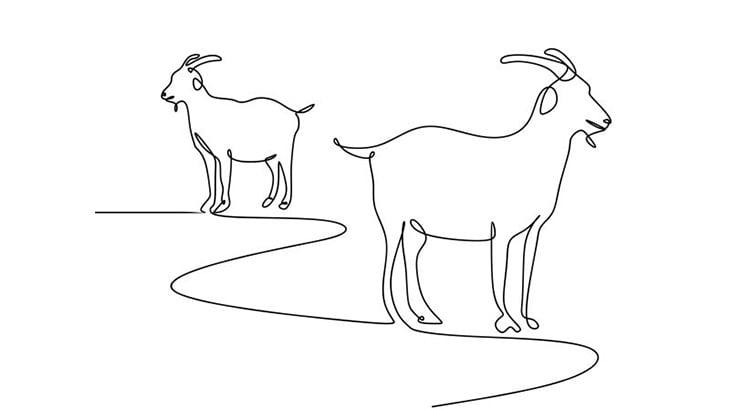 【閲覧注意】ヤギの首を次々切って屠殺する食肉加工場の日常(動画)