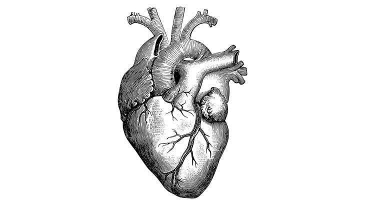 【閲覧注意】切り開かれた胸から動く心臓が丸見えの映像