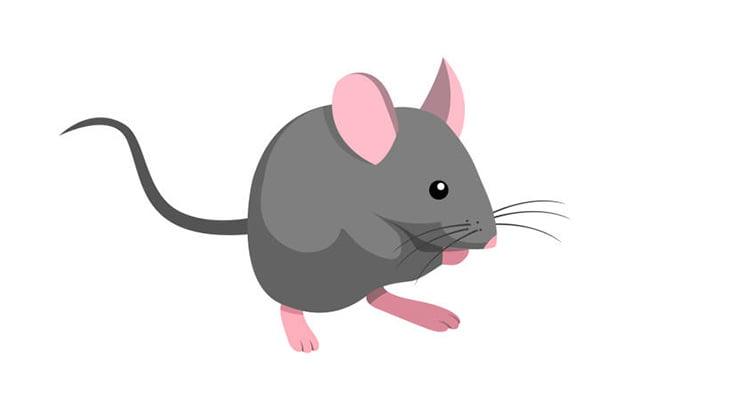 うつ伏せに倒れた女性、ネズミに口の中を漁られてしまう(動画)