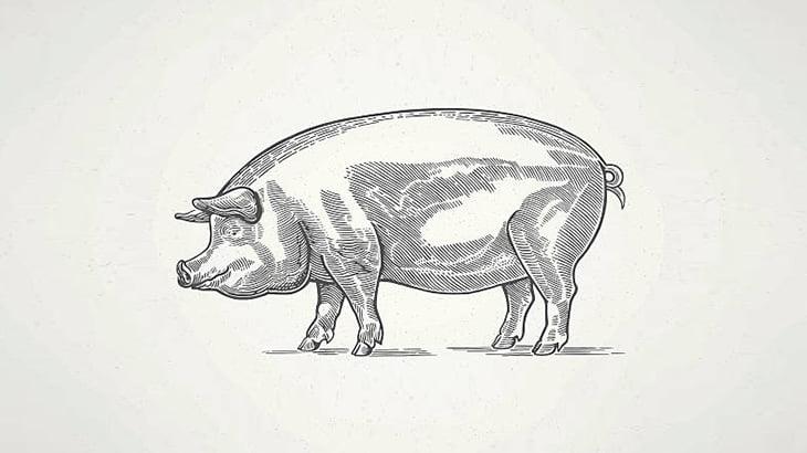 """豚が""""何か""""を咥えてたので近づいてみた結果・・・(動画)"""