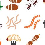 ミールワームやセミを油で揚げて食べる日本の昆虫食、エグいと話題に・・・(動画)