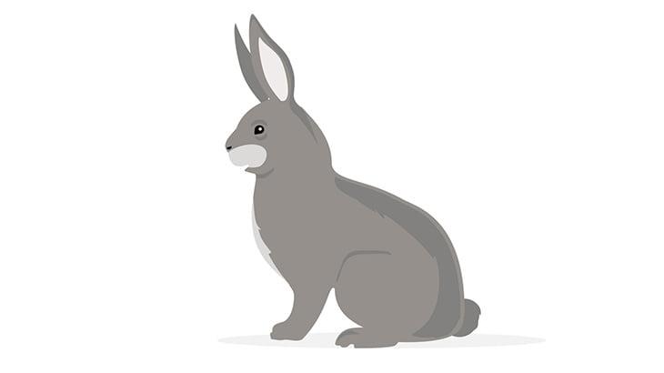 【閲覧注意】イカれた女さん、ウサギにスタンガンを押し当てて遊んでしまう(動画)
