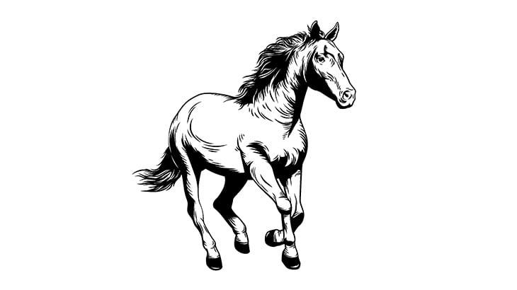 【閲覧注意】馬と衝突したドライバー、死んでしまう・・・(動画)