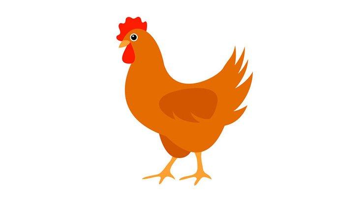 海外のDQNさん、鶏のアナルに爆竹を詰めて爆破させてしまう・・・(動画)