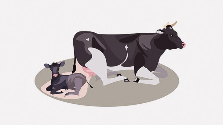 牛の出産を手伝ってあげた女性、理不尽な目に遭ってしまう(動画)