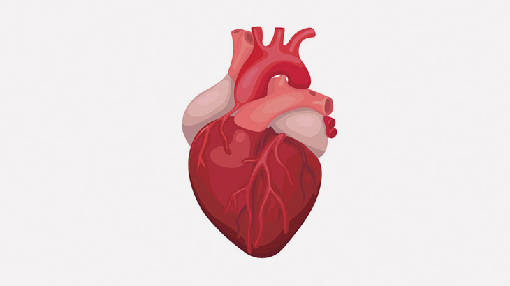 【閲覧注意】突然死した男性の心臓、ヤバいことになってた・・・(画像)