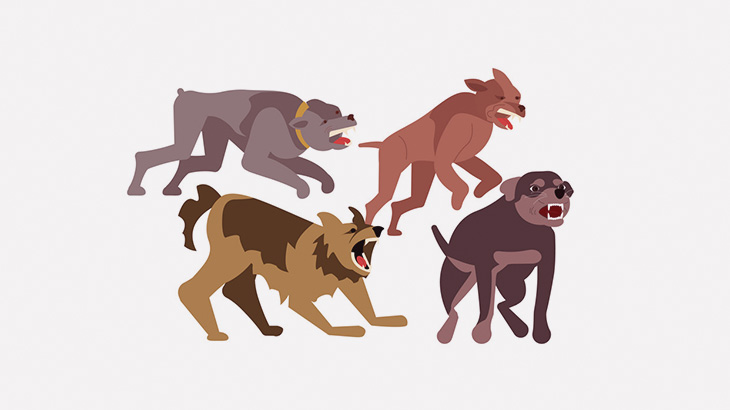 ただ道を歩いていただけの女の子、野良犬の群れに噛まれまくってしまう(動画)