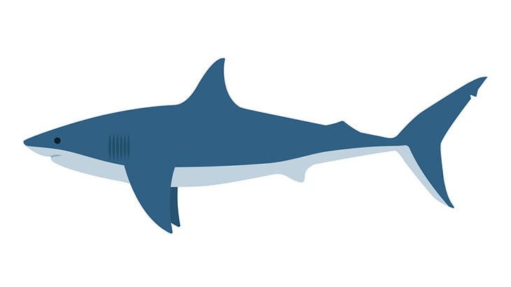 【閲覧注意】サメに襲われたこの男性、左足無くなってる・・・(動画)