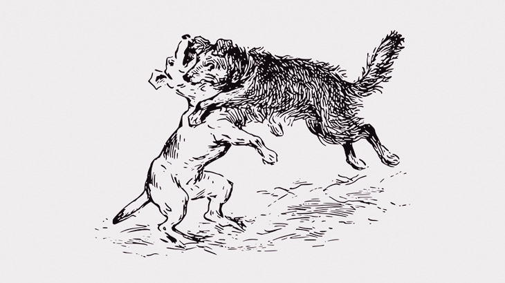 【閲覧注意】犬同士の喧嘩を止めずにいるとこうなる・・・(動画)