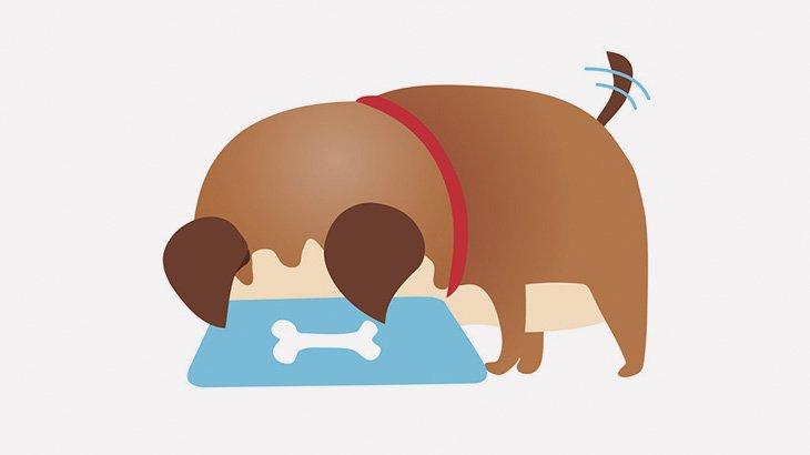 【閲覧注意】野良犬さん、人間の死体を食べてしまう・・・(動画)