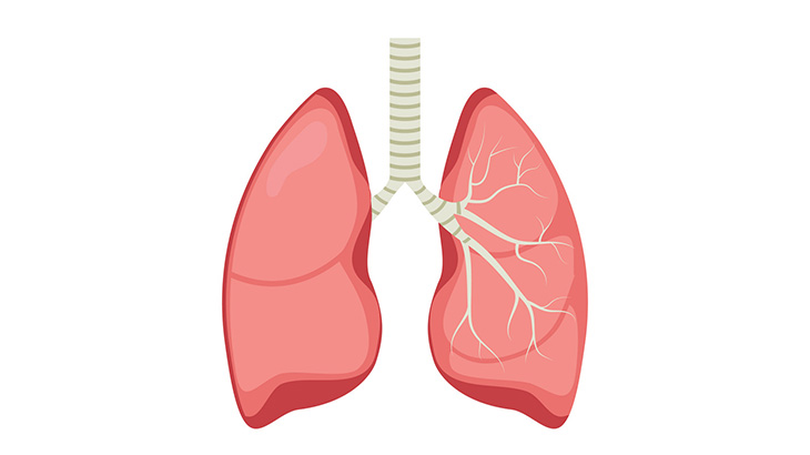 コロナウイルス感染者の肺、ヤバいことになってた・・・(動画)