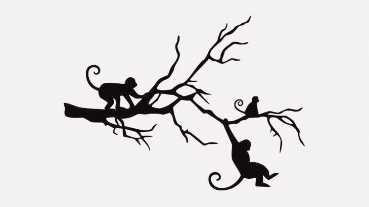 木の上にいたお猿さん、飛び降り自殺してしまう(動画)