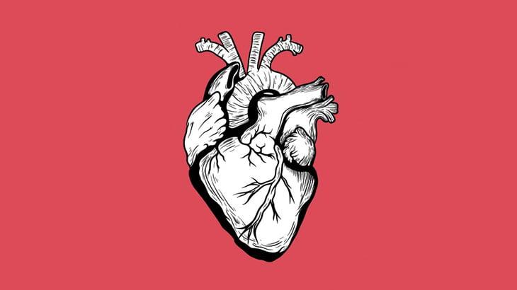 【閲覧注意】人の体から取り出した心臓、装置に取り付ければ動かし続けることができるらしい(動画)