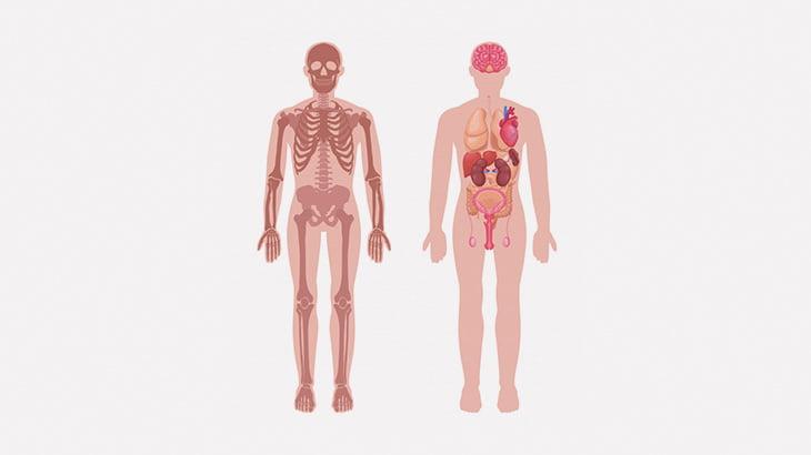 【閲覧注意】解剖映像、ちょい高画質(動画)