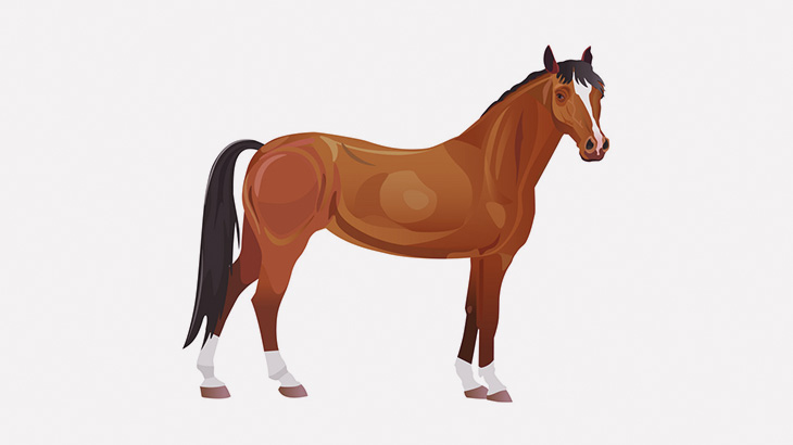 【閲覧注意】馬を解体するよ!(動画)