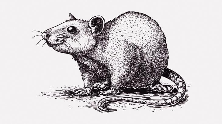 柱に縛り付けたネズミに銃口を向ける男(動画)