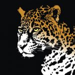 ジャガーと2匹のピットブルが殺りあった結果(動画)