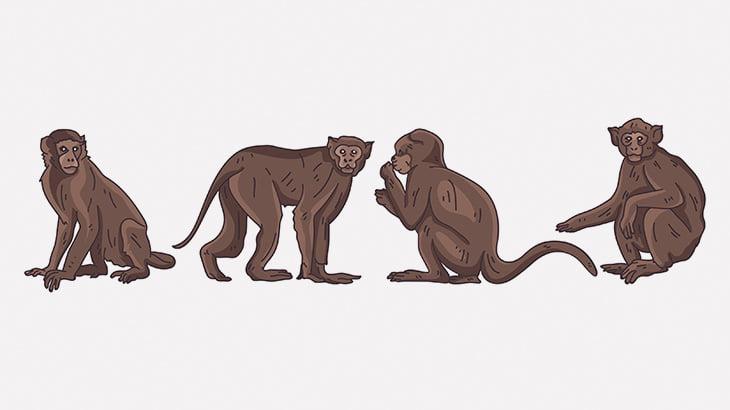 車のサイドミラーに座ったお猿さん、オナニーしてイッてしまう(動画)