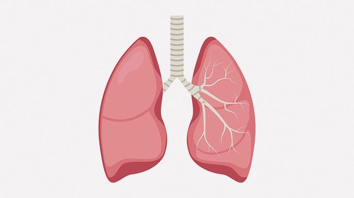 【閲覧注意】溺死した人間の肺、ビッシャビシャ・・・(動画)
