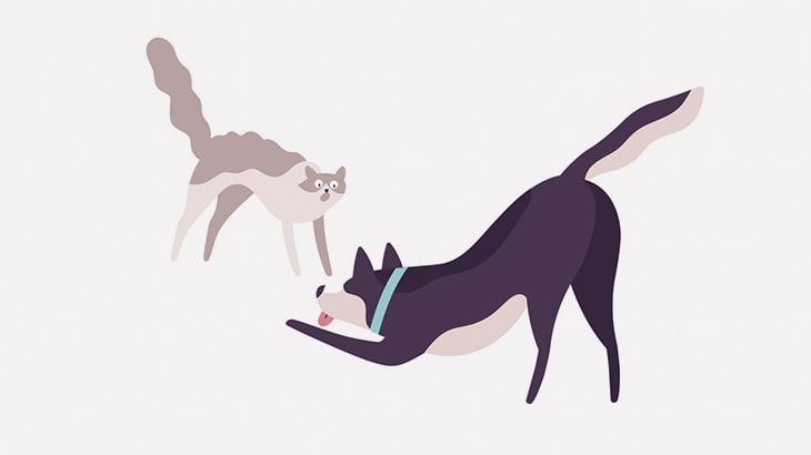 【閲覧注意】犬と喧嘩した猫さん、噛み殺されてしまう・・・(動画)