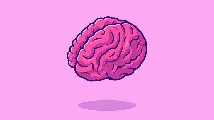 【閲覧注意】人間の頭から取り出した脳を縦に切る映像