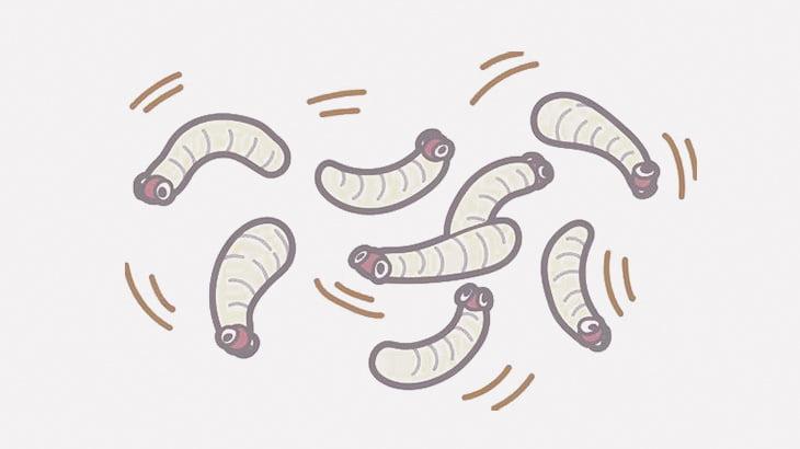 【閲覧注意】顔の左側を大量のウジ虫に食われてしまっている男(動画)
