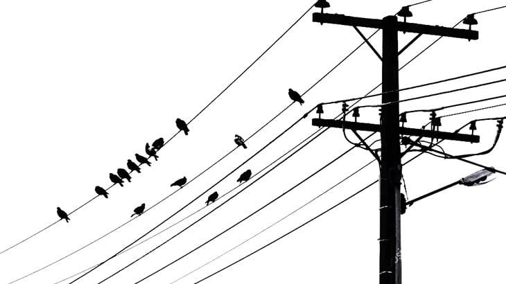男さん「電線に鳥からまってる!助けなきゃ!」→ 感電してどっちも死亡(動画)