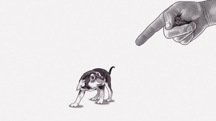 【閲覧注意】子犬たちを殺して遊ぶ男たち(動画)