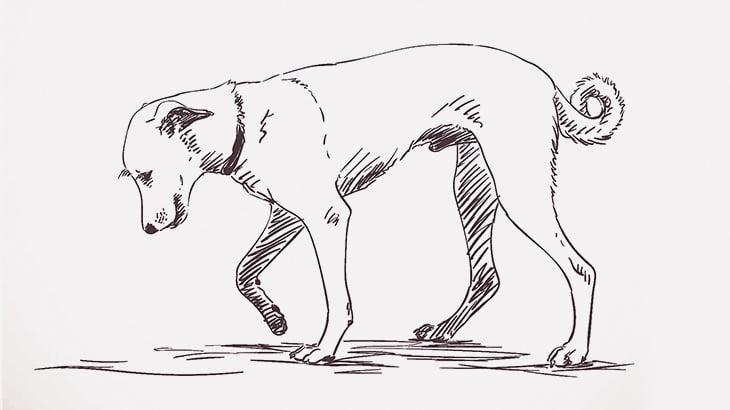 【閲覧注意】犬をマチェーテで殺そうとする男(動画)