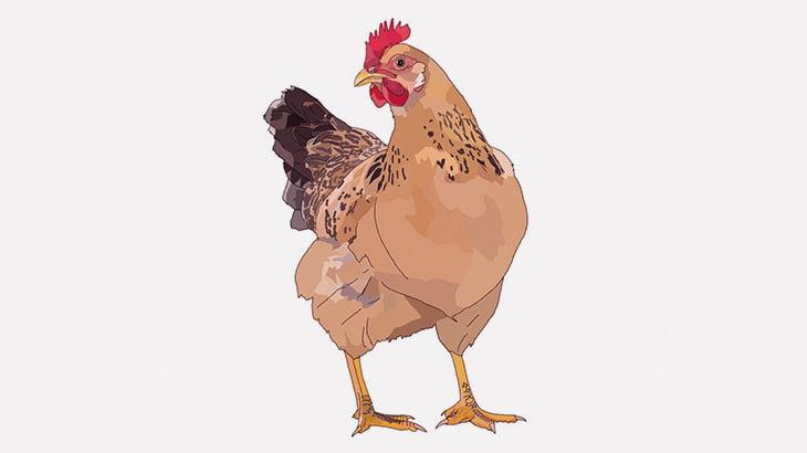 クソガキさん、鶏の肛門にチンコぶち込んで大はしゃぎ(動画)