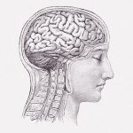 【閲覧注意】頭蓋骨を切り開いて脳を摘出する手順(動画)