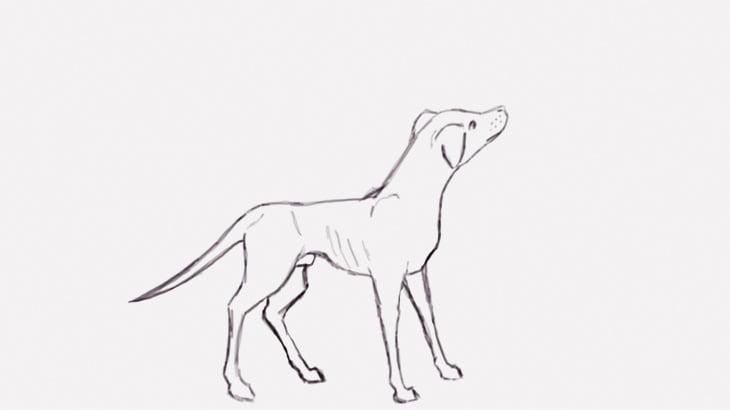 【閲覧注意】犬の頭を瓶で殴って殺す男(動画)