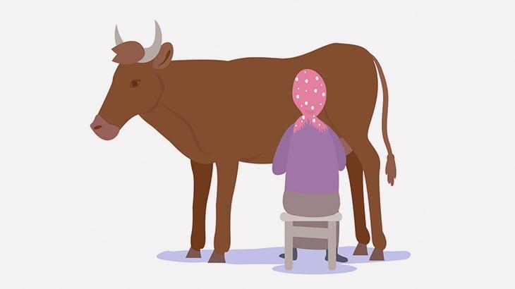 牛の乳搾りしてた女性、ウンコされてしまう(動画)