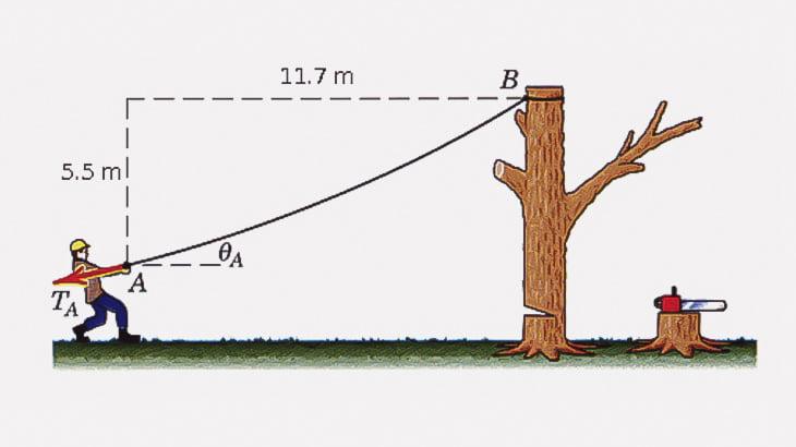 大きな木をロープで引っ張って倒す → 女性に激突(動画)