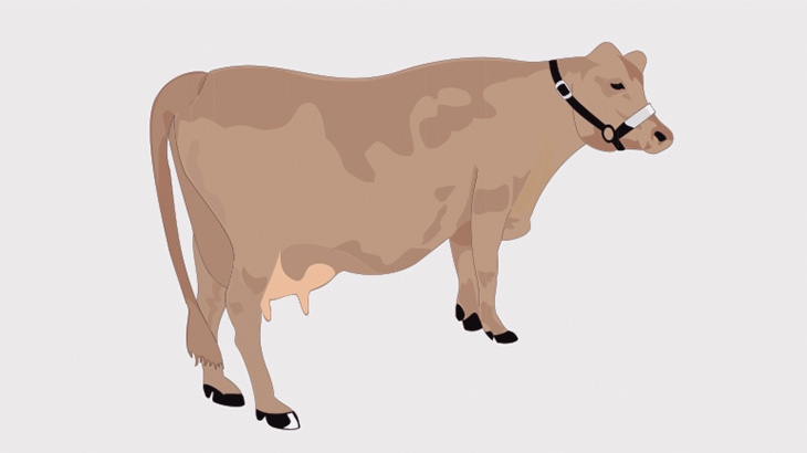 これから屠殺される牛、人間に一矢報いる(動画)