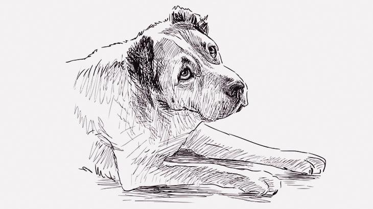 【閲覧注意】犬の頭を棒で叩いて殺す男(動画)