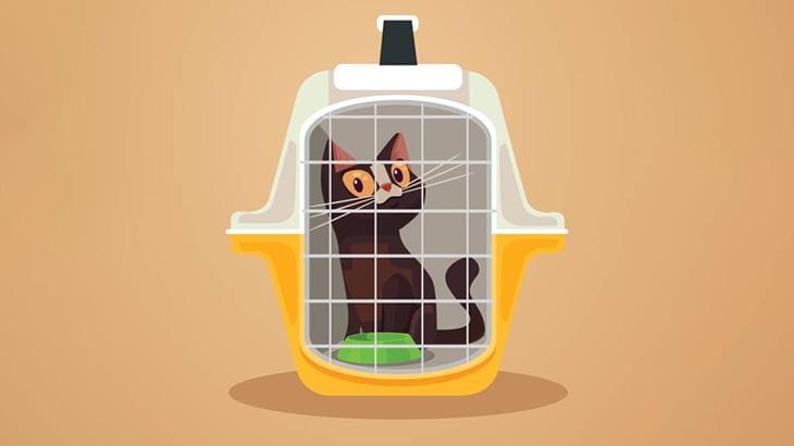 【閲覧注意】イカれたマンさん、小さなかごにいれた子猫に火をつけてしまう(動画)