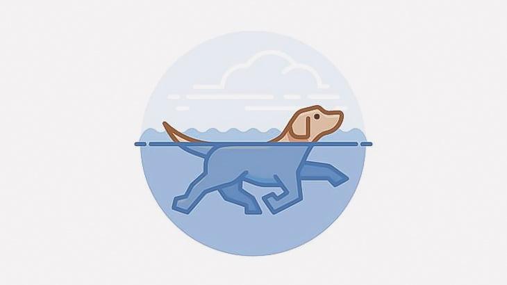 【閲覧注意】人間の死体だらけの川で水浴びする犬(動画)