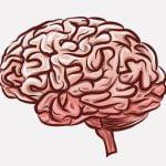 【閲覧注意】解剖医「脳をまるごと摘出してみたよ!」(動画)
