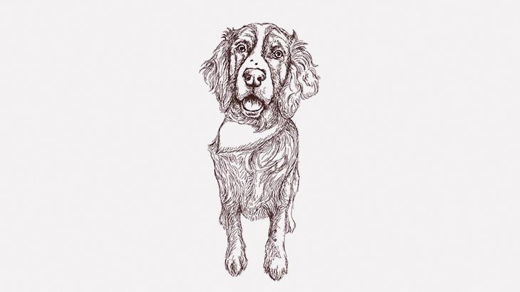 【閲覧注意】ショットガンで頭を割られた男、犬に食われてしまう・・・(動画)