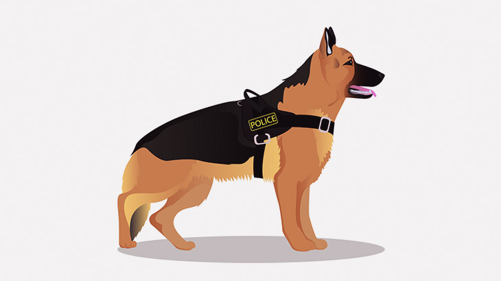 警察犬と信頼関係を築けてないとこうなる(動画)