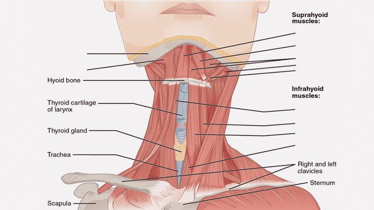 【閲覧注意】死んだ女性の喉を切り開いてみた結果・・・(動画)
