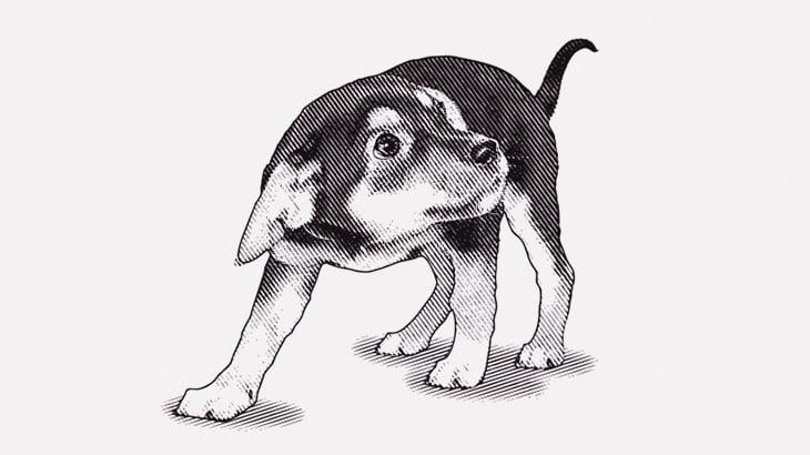 【閲覧注意】小犬に灯油をかける → 火を放つ(動画)