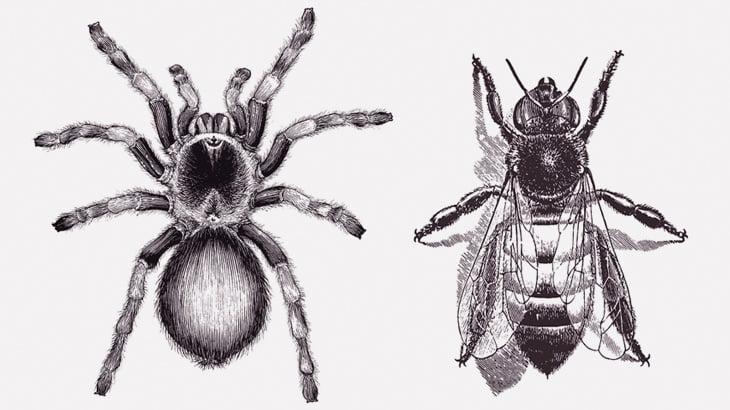 「タランチュラ vs ハチ」の戦い、勝ったのは・・・(動画)