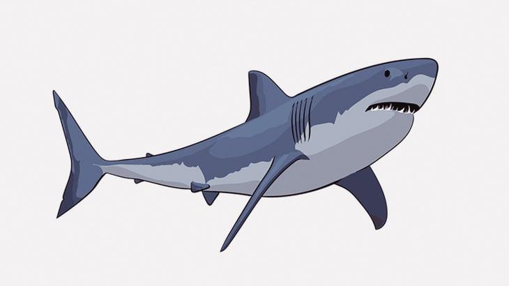 奇形のサメって見たことある?(動画)