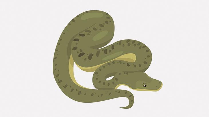 幼い息子を大きなヘビで遊ばせる父親(動画)