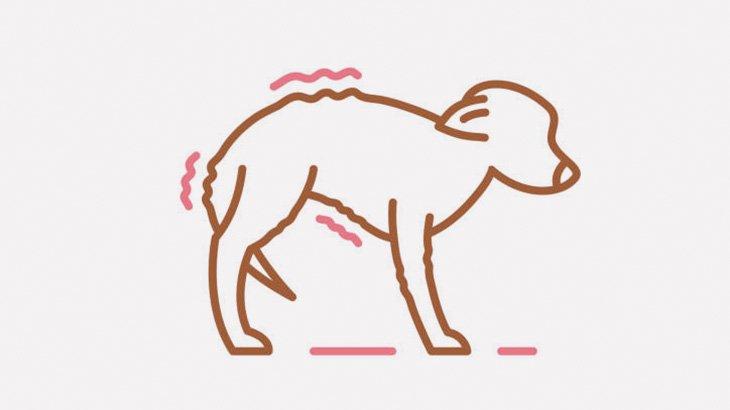 【閲覧注意】この犬、なぜか女に前足を切断されてしまう・・・(動画)