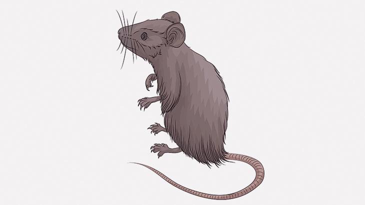 酔っ払った男たち、生きたネズミを火だるまにして遊んでしまう(動画)